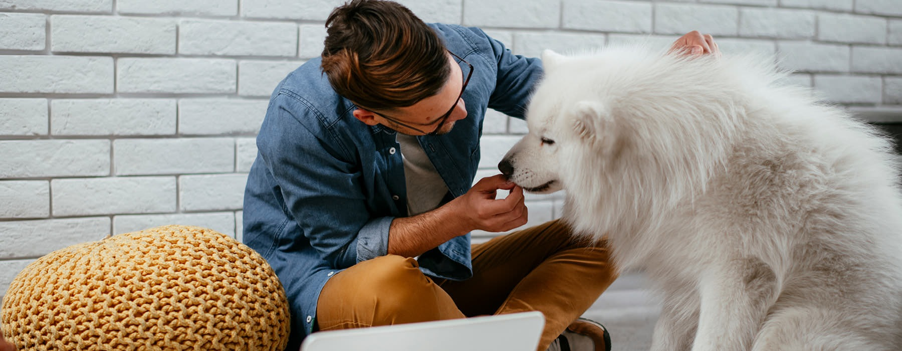 hipster sits on living room floor and feeds his dog